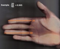 DIGIT RATIO