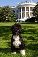 BO OBAMA FAMILY DOG