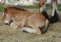 BAY FOAL BABY HORSE