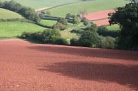 RED SOIL 2