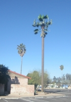 cell-tower-palm